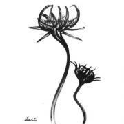 Blomst 1